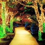 Ehtel M's Cactus Lights