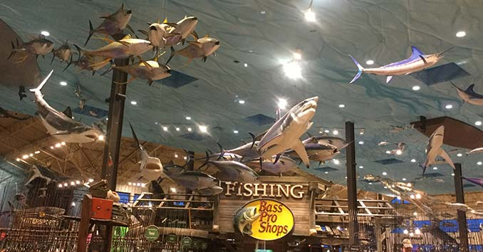 Bass Pro Shop Sharks