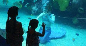 Mermaid Show at the Silverton